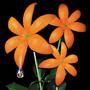 Orange Range – 花