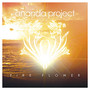 Ananda Project – Fire Flower