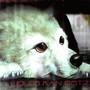 Ilaria Graziano – Wolf's Rain OST 2