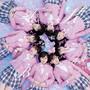 AKB48 – 桜の木になろう