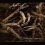 Lycaon – Cordyceps sinensis