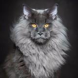 King Lucid